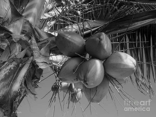 Wall Art - Photograph - Coconuts by John Clark