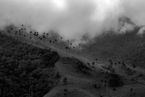 Photograph - Cocora Valley Colombia by Adam Rainoff