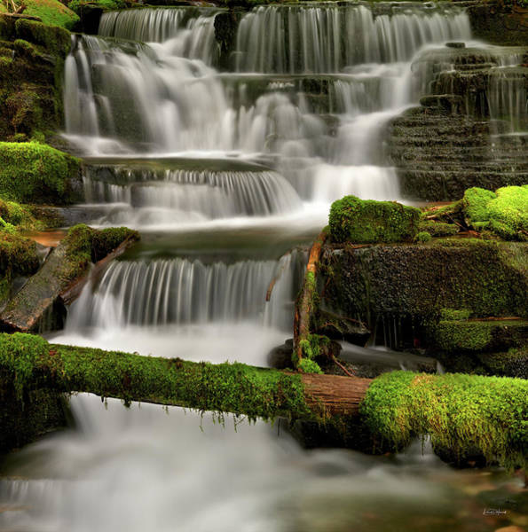 Photograph - Coeur D Alene National Forest Waterfall by Leland D Howard