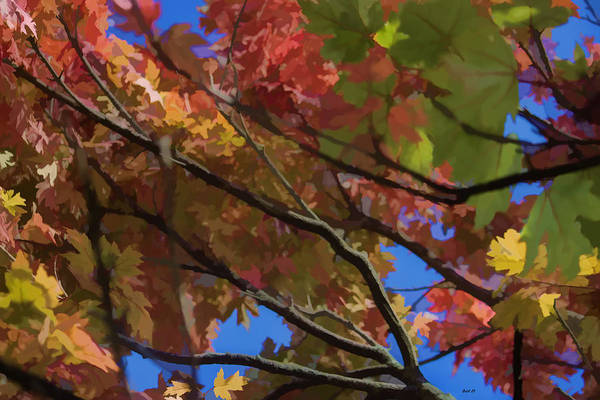 Photograph - Color My World Branches by Roberta Byram