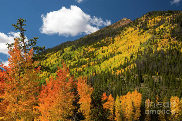Photograph - Colorado Autumn by Jim West