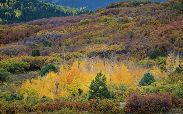 Plateau Wall Art - Photograph - Colorado Autumn by Joseph Smith