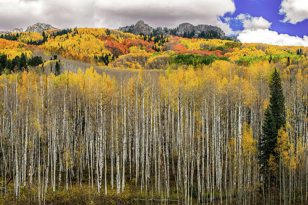 Photograph - Colorado Splendor by Gary Lengyel