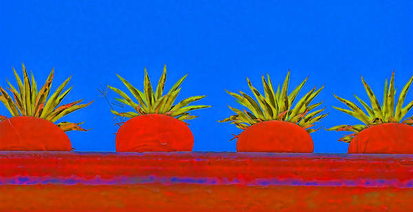 Mexico Photograph - Colorful Potted Plants Mexico by Carol Leigh