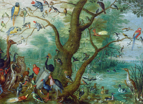 Painting -  Concert Of Birds by Circle of Jan van Kessel