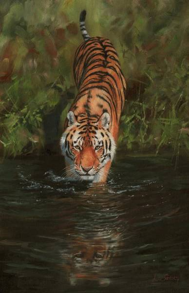 Bengal Tiger Painting - Cool 2 by David Stribbling