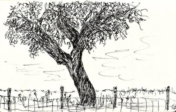Drawing - Cork Oak by Chani Demuijlder