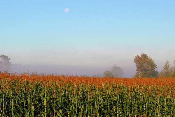 Photograph - Cornfield Moonset by Brian O'Kelly