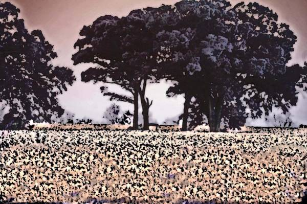 Pea Digital Art - Cotton And The Broccoli Trees by Michael Thomas