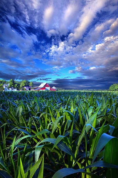 Photograph - Country Living by Phil Koch
