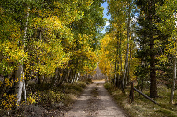 Sierra Nevada Photograph - Country Road by Cat Connor