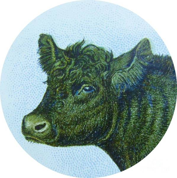 Cow And Calf Wall Art - Digital Art - Cow I by Desiree Warren