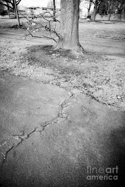 Wall Art - Photograph - Cracking Tarmac Footpath Due To Spreading Growing Tree Roots Liverpool Merseyside England Uk by Joe Fox