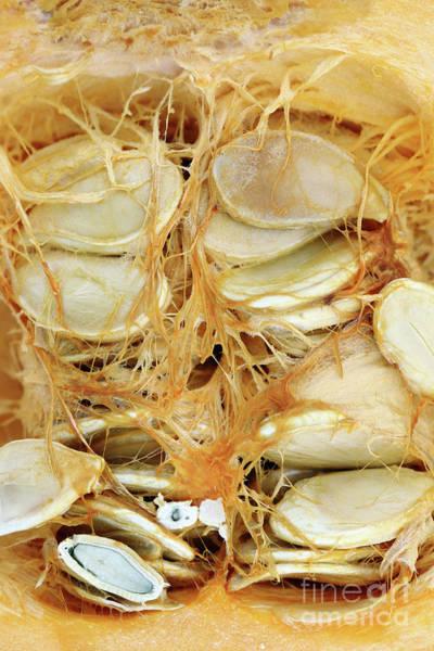 Cucurbit Photograph - Cut Pumpkin - Pumpkin Seeds by Michal Boubin