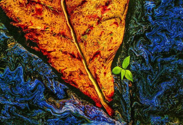Digital Art - Cycle Of Life by Paul Wear