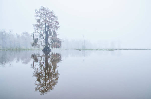 Photograph - Cypress In Reflection by Andy Crawford