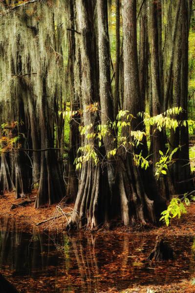 Caddo Lake Wall Art - Photograph - Cypress Trunks by Iris Greenwell