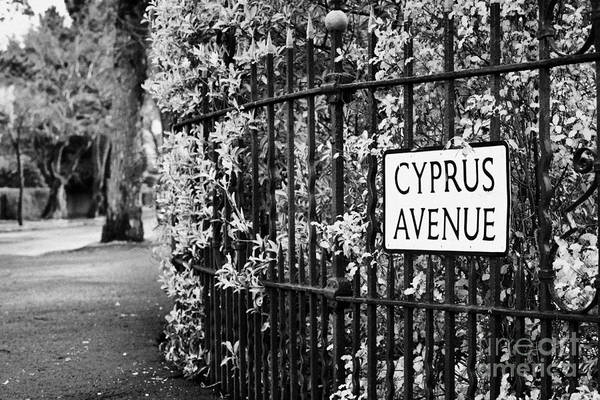 Cyprus Wall Art - Photograph - Cyprus Avenue Belfast As Made Famous By The Van Morrison Song by Joe Fox