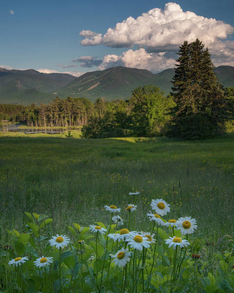 Photograph - Daisies And Cannon Mountain by Darylann Leonard Photography