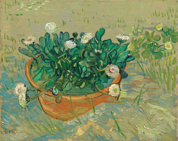 Plant Reproduction Painting - Daisies, Arles by Vincent van Gogh