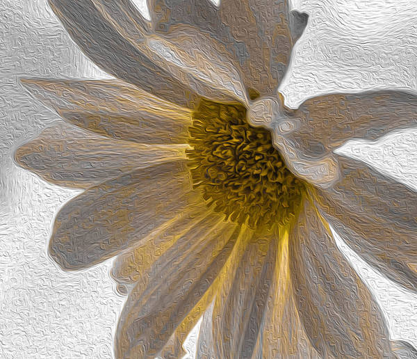 Digital Art - Daisy  by Keith Smith