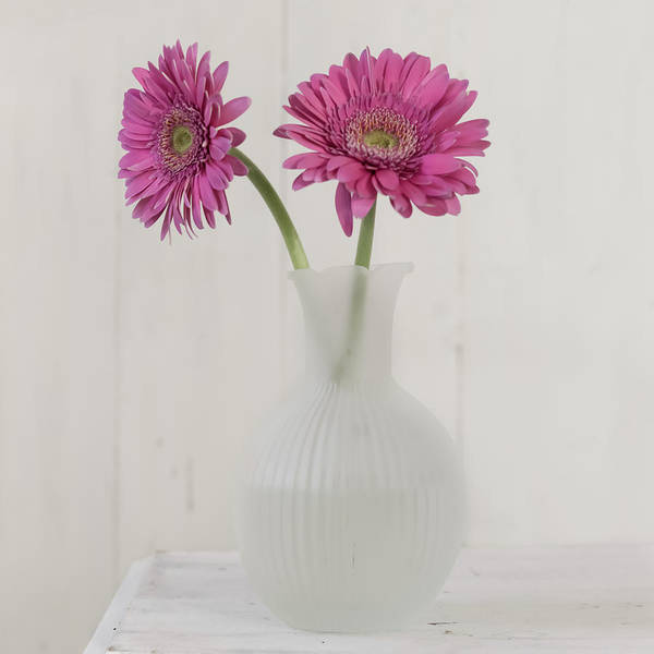 Photograph - Gerbera Daisy Love by Kim Hojnacki