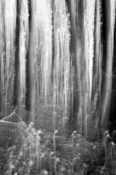 Dim Photograph - Dark Forest Abstractions by Chris Dale