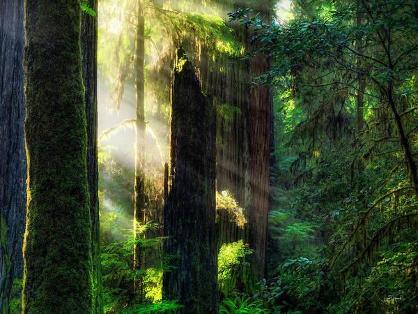 Wall Art - Photograph - Deep Forest Light by Leland D Howard