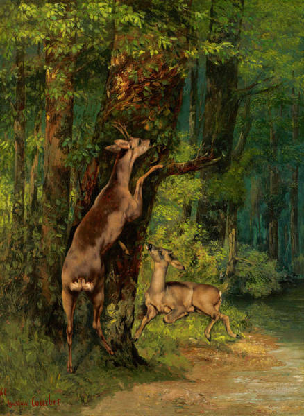 Wall Art - Painting - Deer In The Forest, 1868 by Gustave Courbet