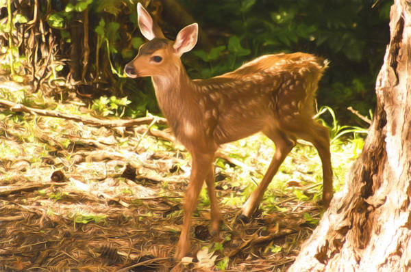 Photograph - Bambi - Painted Effect by Marilyn Wilson