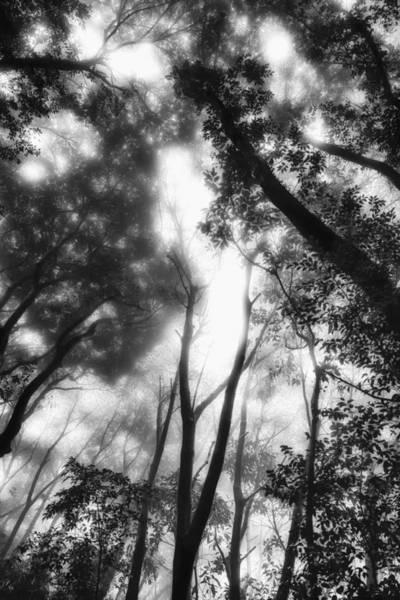 Photograph - Dejavu by Hayato Matsumoto