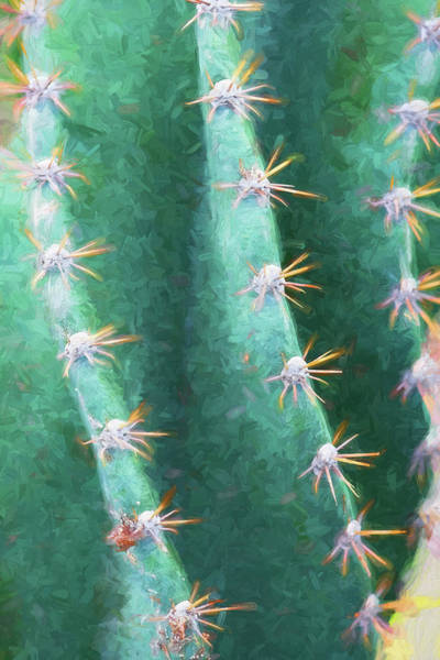 Photograph - Desert Cactus And Succulents 025 by Rich Franco
