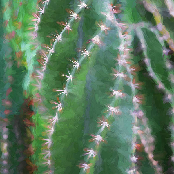 Photograph - Desert Cactus And Succulents 041 by Rich Franco