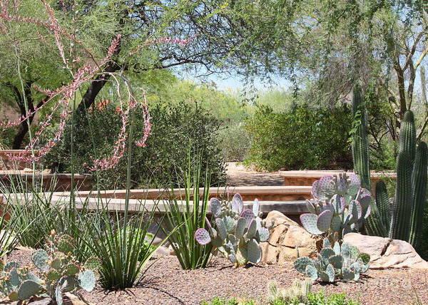 Photograph - Desert Garden by Carol Groenen