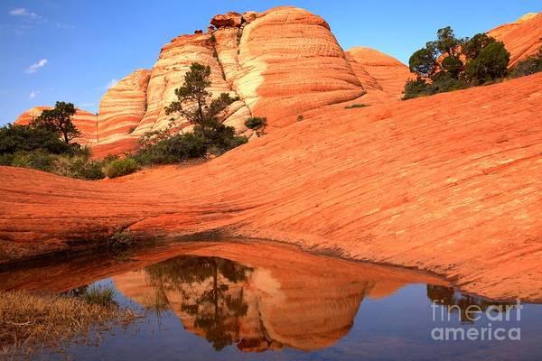 Photograph - Desert Oasis Reflections by Adam Jewell