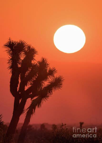 Photograph - Desert Sunrise by Vincent Bonafede