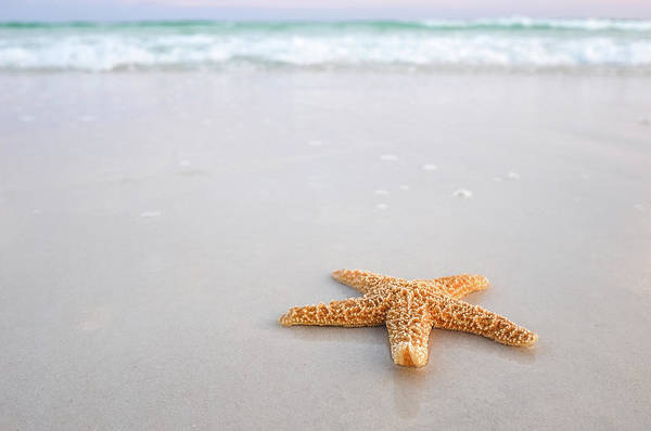Destin Florida Miramar Beach Starfish Art Print