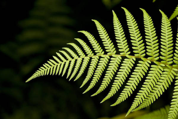 Detail Of Asian Rain Forest Ferns Art Print