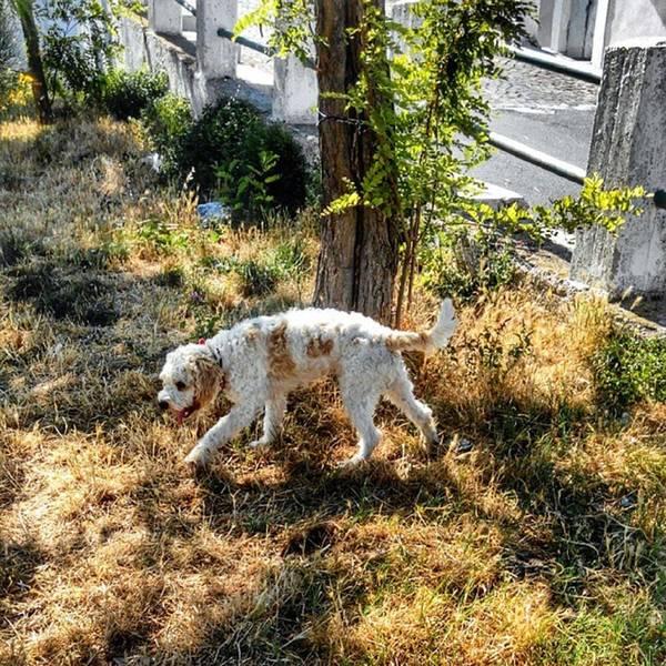 Nature Seekers Photograph - #dog #lagotto #lagottoromagnolo #pet by Michele Stuppiello