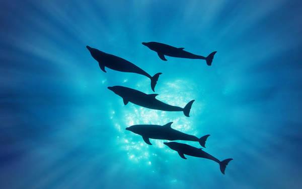 Transportation Digital Art - Dolphin by Super Lovely