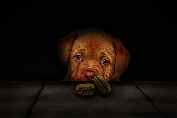 Dog Biscuit Photograph - Dont Take The Biscuits by Phil Pace