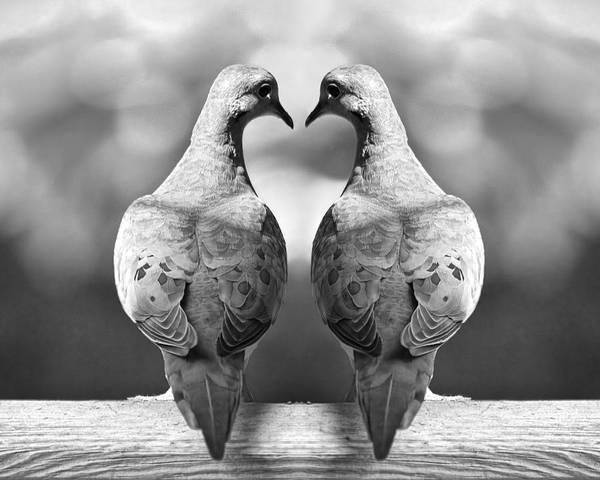 Dove Birds Art Print