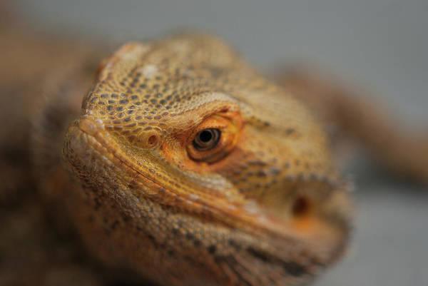 Photograph - Dragon Eye - 0142 by G L Sarti
