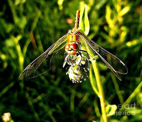 Photograph - Dragon Fly by 'REA' Gallery