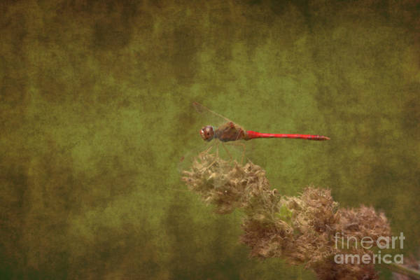 Photograph - Dragonfly by Charles Owens
