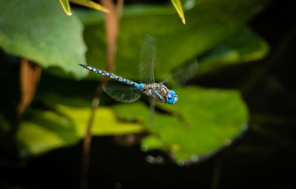 Photograph - Dragonfly 2 by Marilyn Wilson