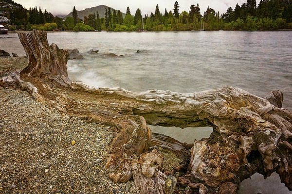 Photograph - Lakeside Driftwood by Joan Carroll
