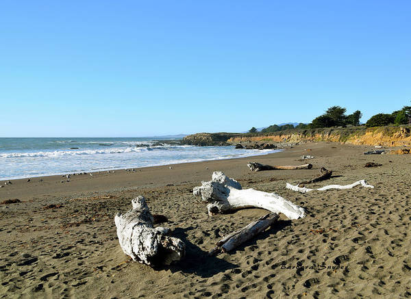 Wall Art - Photograph - Driftwood On Moonstone Beach by Barbara Snyder