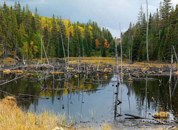 Drown Photograph - Drowned Trees by Oleksiy Maksymenko