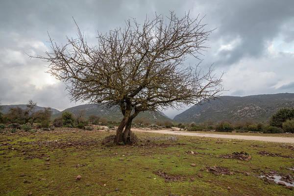 Photograph - Dry Tree by Daniele Fanni